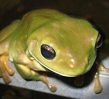 Frog by VenusOak