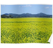 You Yangs and canola Poster