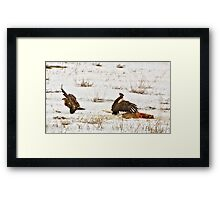 Eagles And Deer Carcass Framed Print