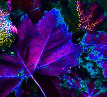 Colors of Night ! by Sharon Hagler