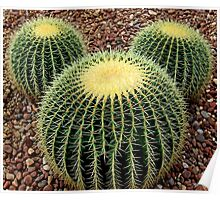 Mickey Mouse Barrel Cactus Poster