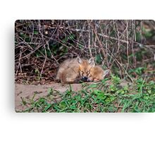 Fox Kit 6 Metal Print