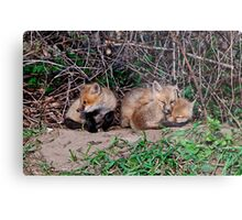 Fox Kits 5 Metal Print