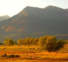 Cows in the Valley by JoAnn Glennie