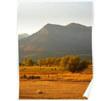 Cows in the Valley Poster