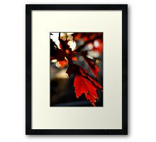 Autumn Red - Parker, CO Framed Print