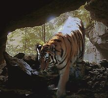 The tiger emerges by Judi Taylor