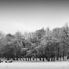 Through the fields of snow by AndreeaGogu
