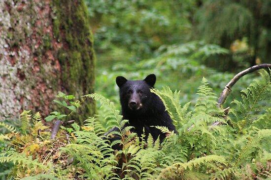 Black Bear by sarah ward