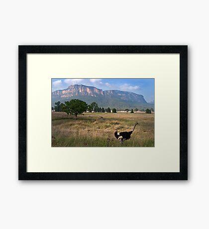 Glen Davis Framed Print