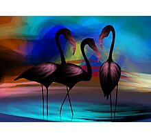 Appealing beauty of the cranes in the lake Photographic Print
