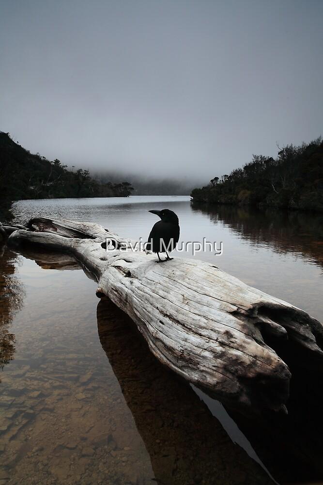 the blackjays log...... by David Murphy