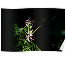 Beautiful Weeds 2 Poster