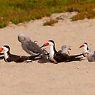 Beach Birds by Steve Hunter