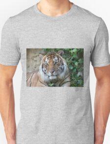tiger at the zoo T-Shirt