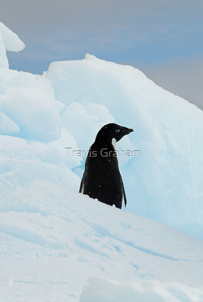 Lonely Penguin by Travis Graham