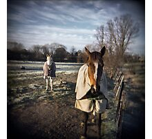 Winter Horses Photographic Print