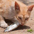 Catfish by AJM Photography