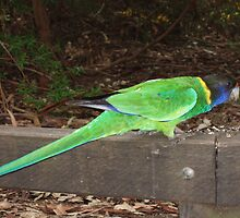 Twenty-eight Parrot by simonescott