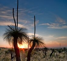 Grass Tree Sunset by Jonathan Stacey