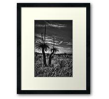 Grass Tree Sundowner Framed Print