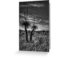 Grass Tree Sundowner Greeting Card