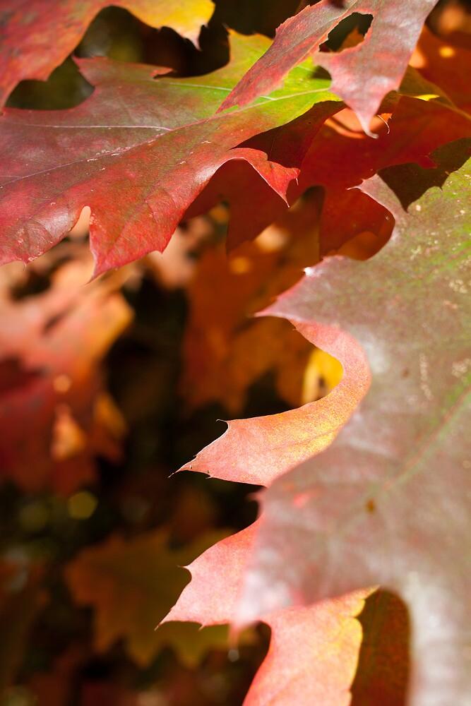 Digital Scavenger Hunt-Autumn by Benjamin Sharp