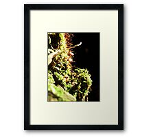 Not so humongous fungus Framed Print