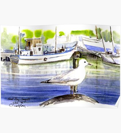 Seagull: Hout Bay, Capetown Poster