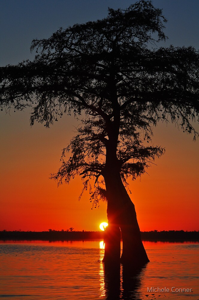 Cypress Sunset by Michele Conner