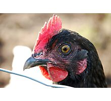 """BokBok"" - close-up of hen. Photographic Print"
