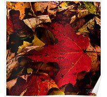 Maple Leaf Poster