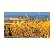Golden grass texture like sun...... Art Print