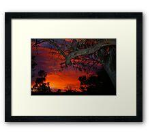 Eucalyptus in sunset Framed Print