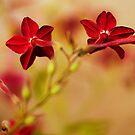 Red by Stas Medvedev