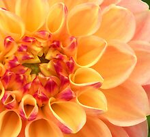 heart of a dahlia by Linda  Makiej Photography