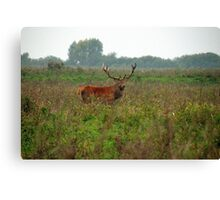 Red Deer Hart Canvas Print