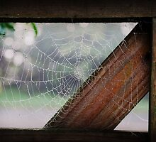 """Web on gate"" by pollyorange"