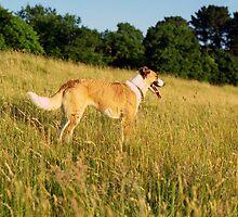 Llanfairfechan dogs  by Michael Haslam
