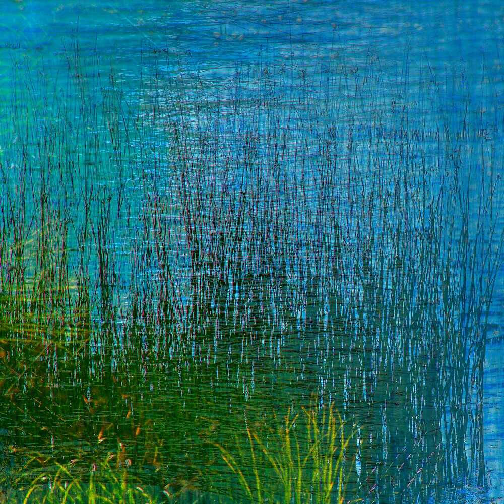 Bed of Reeds by finnarct