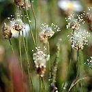 Spring Flowers by Ihosvanny Cordoves