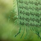 himalayan prayer flag (2) by codaimages