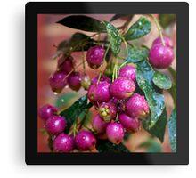 Berry Pink.... Metal Print