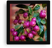 Berry Pink.... Canvas Print