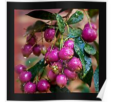 Berry Pink.... Poster