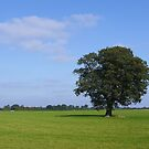 A tree a cloud a field the sky by acombdave