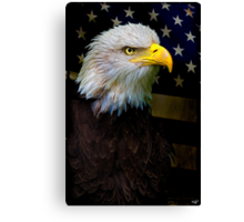 American Bald Eagle, USA Canvas Print