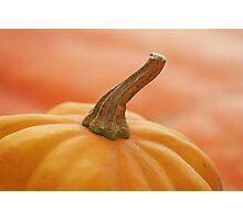 ohhhh pumpkin! Photographic Print