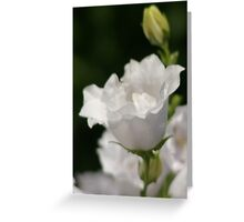 Bellflower White Double Peachleaf  Greeting Card