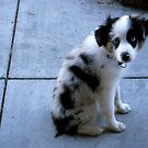 Puppy by Tama Blough
